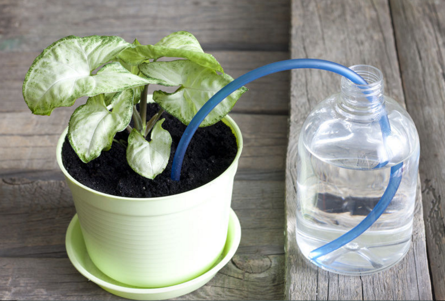 Keeping Houseplants Alive when You're Away!